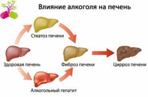 Восстановление печени после алкоголя: сроки, методы и профилактика